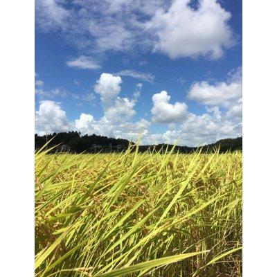 画像3: 平成29年産 特別栽培米コシヒカリ多古米(玄米)5kg