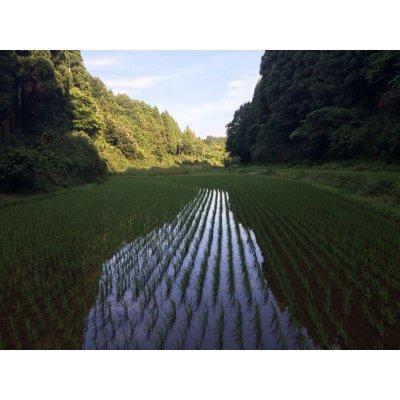 画像4: 平成29年産 特別栽培米コシヒカリ多古米(精米)3kg袋×2